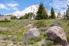 Pico de montaña y flores púrpuras Fotos de archivo libres de regalías