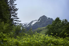 Pico de montanha e uma floresta Foto de Stock