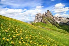 Pico de Seceda com as flores durante horas de verão nas dolomites, Itália imagem de stock
