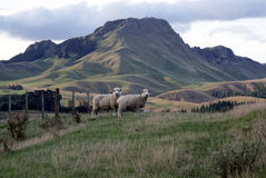 Pico de Tamata, bahía de Hawkes, Nueva Zelandia. Fotos de archivo libres de regalías