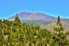 Pico de Teide (Sluimerende Vulkaan), Tenerife, Canarische Eilanden, Spanje, Europa Stock Afbeeldingen