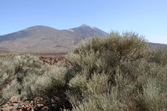 Pico de Teide, Tenerife Royalty Free Stock Images
