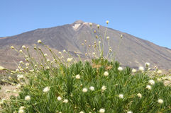 Pico de Teide, Tenerife Spain Stock Photos
