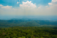 Pico del bosque Fotografía de archivo libre de regalías