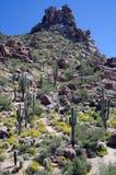 Pico del pináculo sobre fila del Saguaro gigante Imagen de archivo libre de regalías