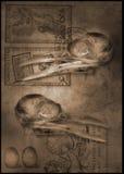 Pico del scull del pájaro stock de ilustración