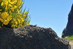 Pico Do Arieiro βουνά Στοκ Φωτογραφία