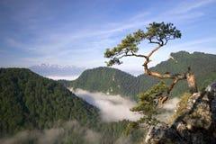 Pico em Pieniny, Poland de Sokolica Imagens de Stock Royalty Free