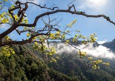 Pico faz Arieiro visto do ponto de vista de Balcoes, Ribeiro Firo, Madeira Imagem de Stock