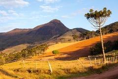 Pico gör Papagaio - stenigt berg arkivfoton