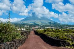 Pico Island, Azores Stock Photography