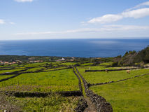 Pico island green field Royalty Free Stock Images