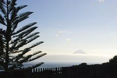 Pico met boomsilhouet Royalty-vrije Stock Fotografie