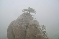 Pico rocoso en la niebla, un pequeño árbol en el top Imágenes de archivo libres de regalías