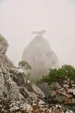 Pico rocoso en la niebla, un pequeño árbol en el top Imagen de archivo libre de regalías
