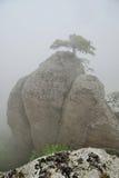 Pico rocoso en la niebla, un pequeño árbol en el top Foto de archivo libre de regalías