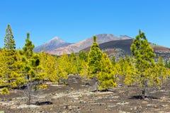 Pico Viejo и El Teide, национальный парк El Teide, Тенерифе Стоковые Фотографии RF