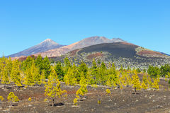 Pico Viejo and El Teide, El Teide National Park, Tenerife Stock Photos
