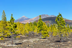 Pico Viejo Teide i El, El Teide park narodowy, Tenerife Zdjęcia Royalty Free