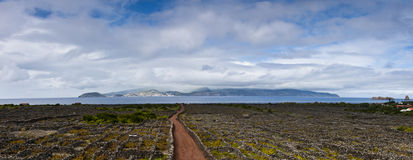 Pico vineyards. Stiched panorama of the Vineyards corrals on pico island with faial island at background, these stone made corrals are classified by unesco as royalty free stock photo