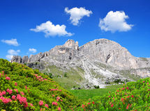 Picos da dolomite, Rosengarten Imagem de Stock
