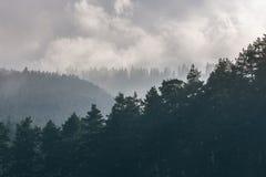 Picos das árvores durante a manhã nevoenta Fotos de Stock Royalty Free