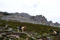 Picos de Europa stockbilder
