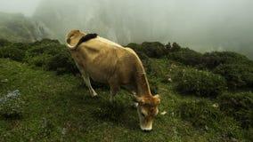 Picos de Europa, Asturias, España Imágenes de archivo libres de regalías