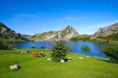 Picos De Europa Enol jezioro w Asturias Hiszpania fotografia stock