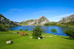 Picos de Europa Enol lake in Asturias Spain. Enol lake at Picos de Europa in Asturias of Spain stock photography