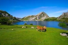 Picos de Europa Enol sjö i Asturias Spanien royaltyfria foton