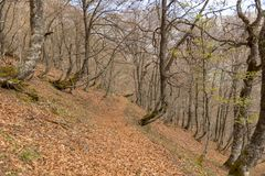 Picos de Europa mountains next to Fuente De village Cantabria Spain. Picos de Europa mountains next to Fuente De village Cantabria Spain stock photos