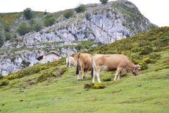 Picos de europa. Photo of north of Spain. Picos de europa Stock Photo
