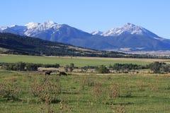Picos de montaña rocosa prístinos Imagenes de archivo