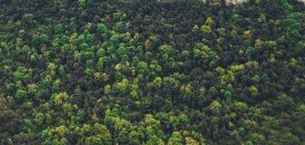 Picos de montanha da manhã da vista superior na paisagem natural verde A montanha do fundo cobre o vale Opinião de perspectiva do Fotografia de Stock Royalty Free