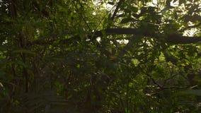 Picos de Sun a través de árboles metrajes