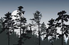 Picos del árbol del bosque conífero debajo del cielo nocturno con la Luna Llena o stock de ilustración