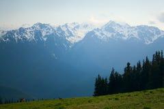 Picos del Mt. Olympus en el huracán Ridge fotos de archivo