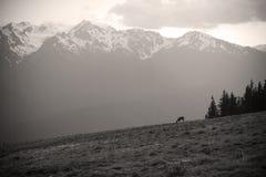 Picos del Mt. Olympus en el huracán Ridge en sepia imágenes de archivo libres de regalías