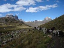 Picos e montanhas da neve em Peru foto de stock royalty free