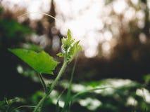 Picos macios vegetal, luz solar e fundo borrado do close-up Foto de Stock Royalty Free
