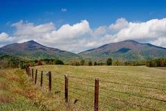 Picos nutria de octubre de 2007 Imagenes de archivo