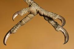 Picoteador de madera arbolado Imagen de archivo libre de regalías