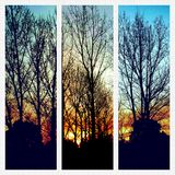 3 pics at dawn. Stopped as doon as I could tp capture this delight royalty free stock photography