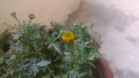 Pics of my garden. Plants macroshot pics at home royalty free stock images