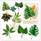 Pictogramas tropicales verdes de las hojas fijados Imagen de archivo