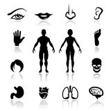 Pictogrammen geplaatst menselijke organen Royalty-vrije Stock Afbeeldingen