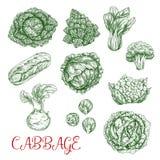 Pictogrammen van de kool de vectorschets van groenten Royalty-vrije Stock Afbeelding
