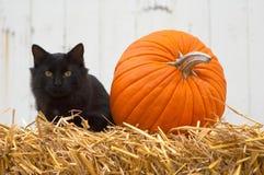 Pictogrammen van Oktober Royalty-vrije Stock Foto