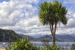 Picton jest miasteczkiem w Marlborough regionie Nowa Zealand Południowa wyspa fotografia stock